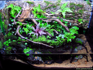 Un paludarium avec plantes tropicales palustres et paludéennes